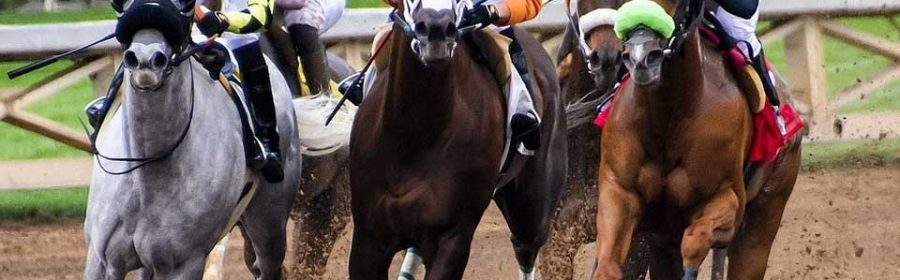 Which-Type-of-Horses-Are-Best-for-Racing