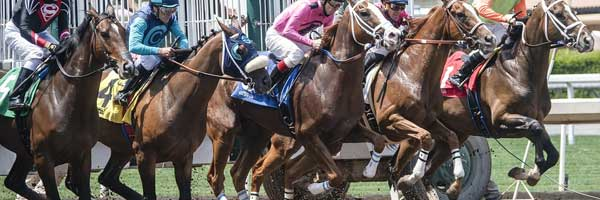 Guide for Training A Horse for The Race racing horse - Guide for Training A Horse for The Race