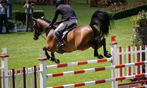 5 Things You Should Know About Dressage jumping horse - 5 Things You Should Know About Dressage