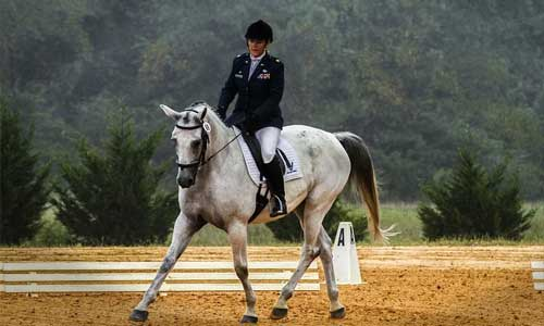 5 Things You Should Know About Dressage white horse - 5 Things You Should Know About Dressage